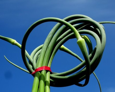 Garlic Scapes (click for a pic and some ideas!)